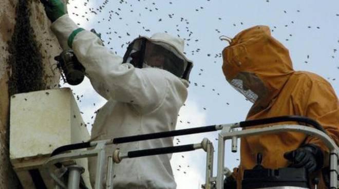 Bonifica dalle vespe
