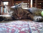 La gattina abbandonata in zona Meridiana
