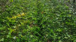 I danni del maltempo in agricoltura