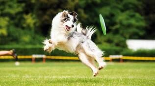 cane sportvo